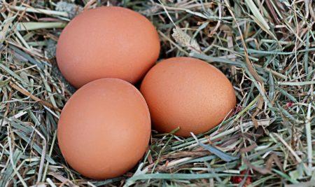 Vyšší nutriční hodnota bio-vajec