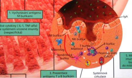 Prevence rakoviny výživou