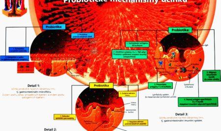 Komplexní strava s probiotiky a krevní tlak
